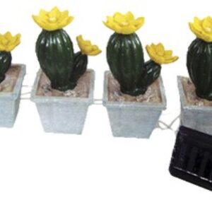 цветущие кактусы цветущие кактусы