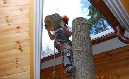 Удаление опасных деревьев, как крайняя мера